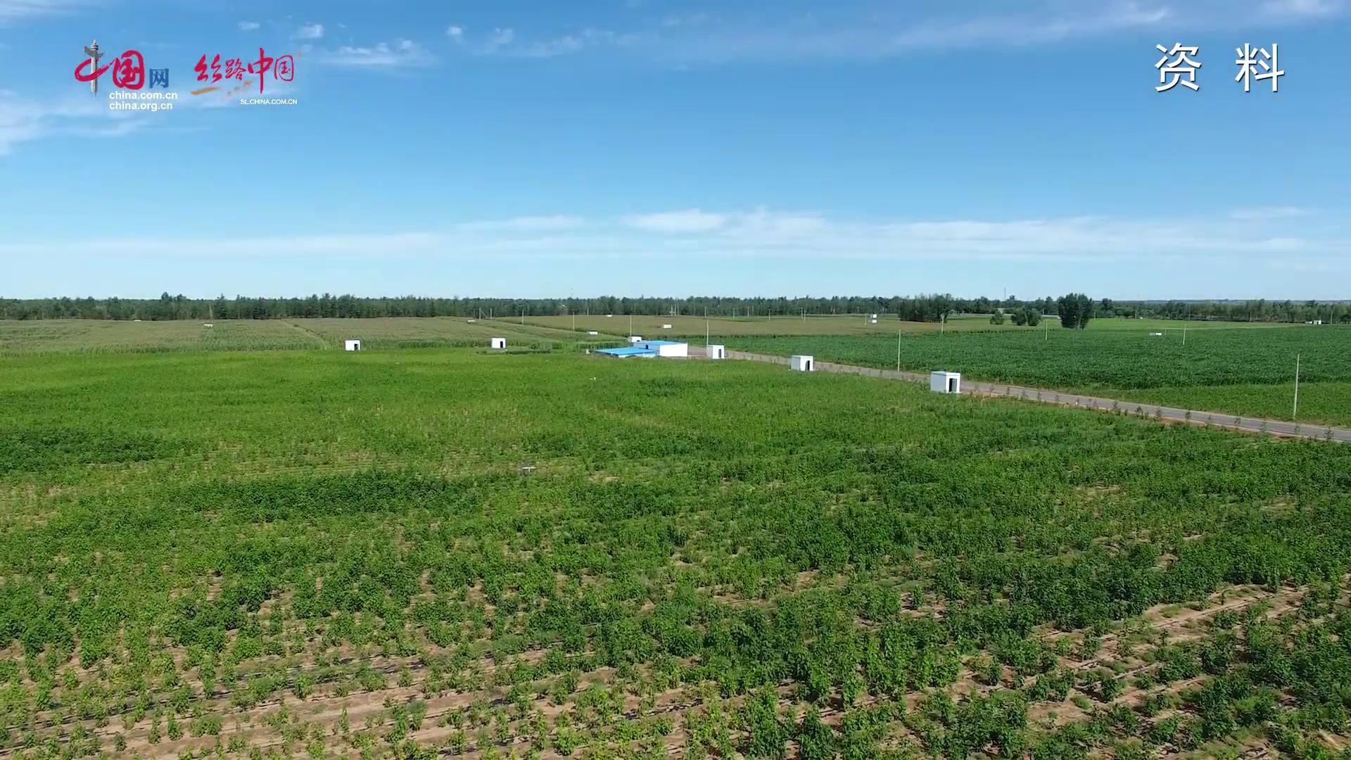 长青集团:黄沙地上健康生态农业探索者
