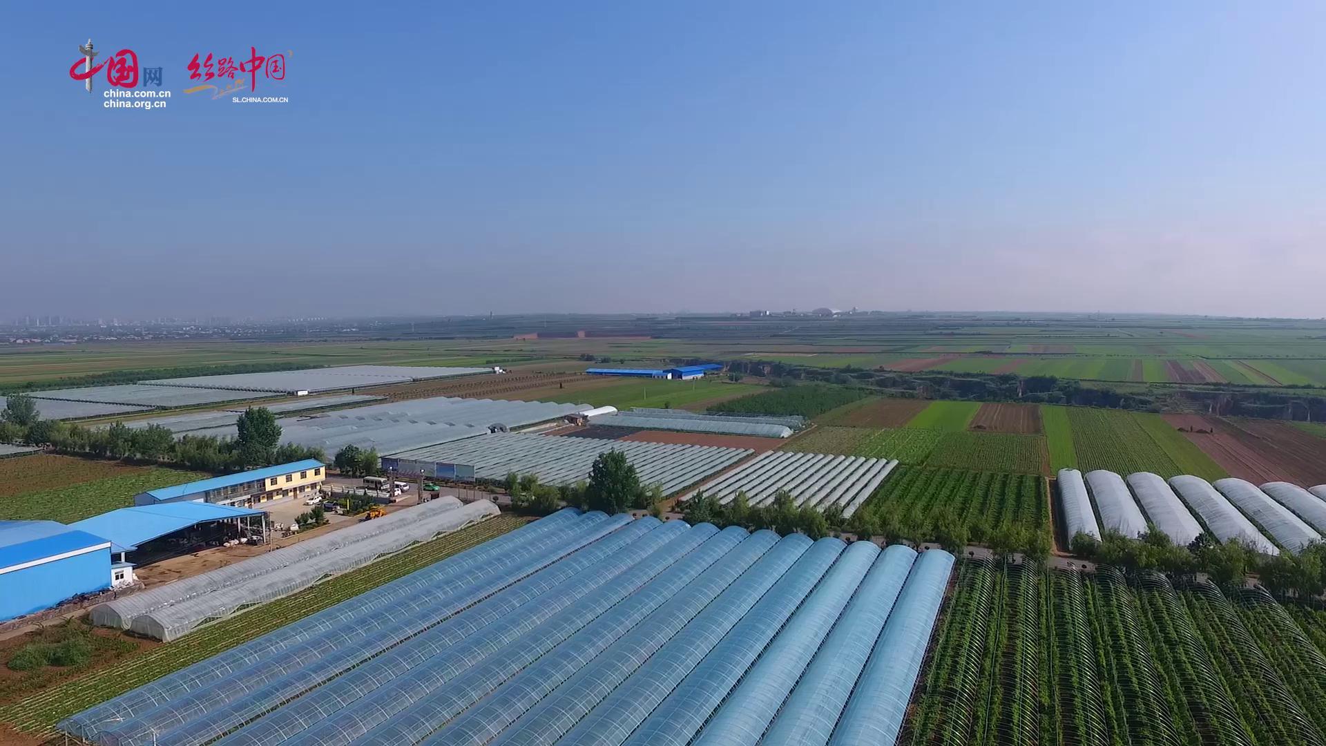 """【视频】合阳县南沟村:现代农业园成为精准扶贫的""""金钥匙"""""""