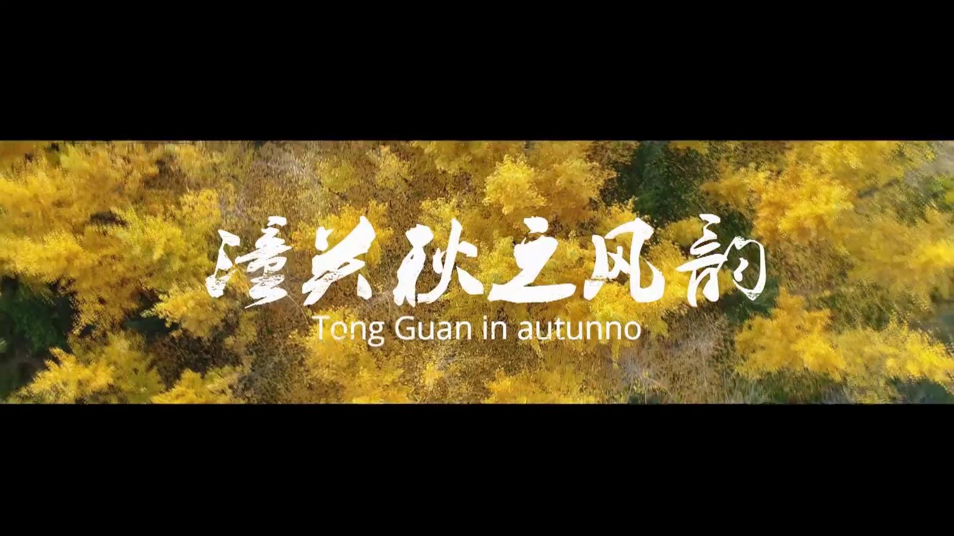 潼关县委宣传部:秋之风韵